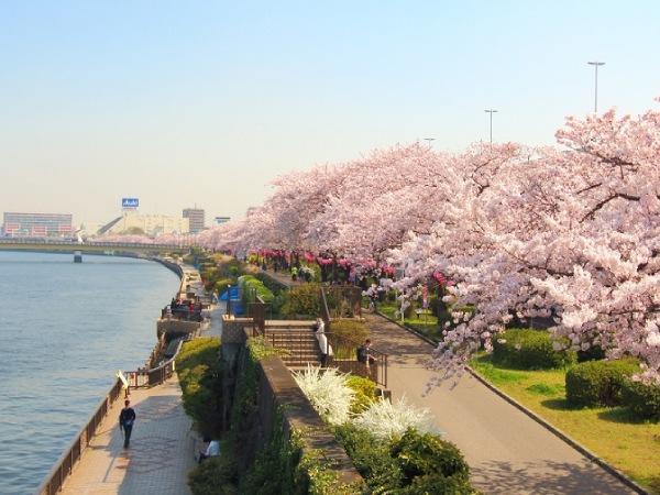 Cần mang theo những gì khi du lịch Nhật Bản?